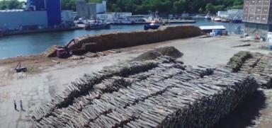 Ceny drewna w Polsce. Co mogłoby je obniżyć?